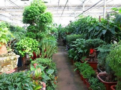 市政园林绿植租赁
