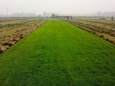 高速公路护坡草皮